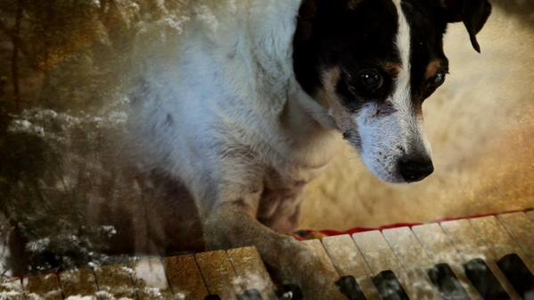 Passatempo #34: Heart of a Dog (LEFFEST 2015)